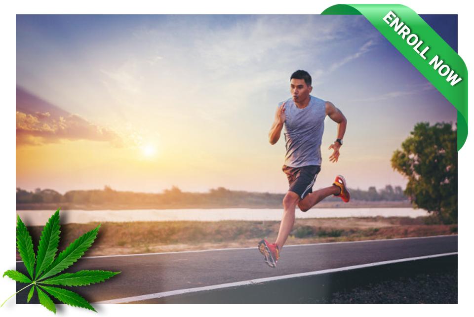The Cannabis Institute